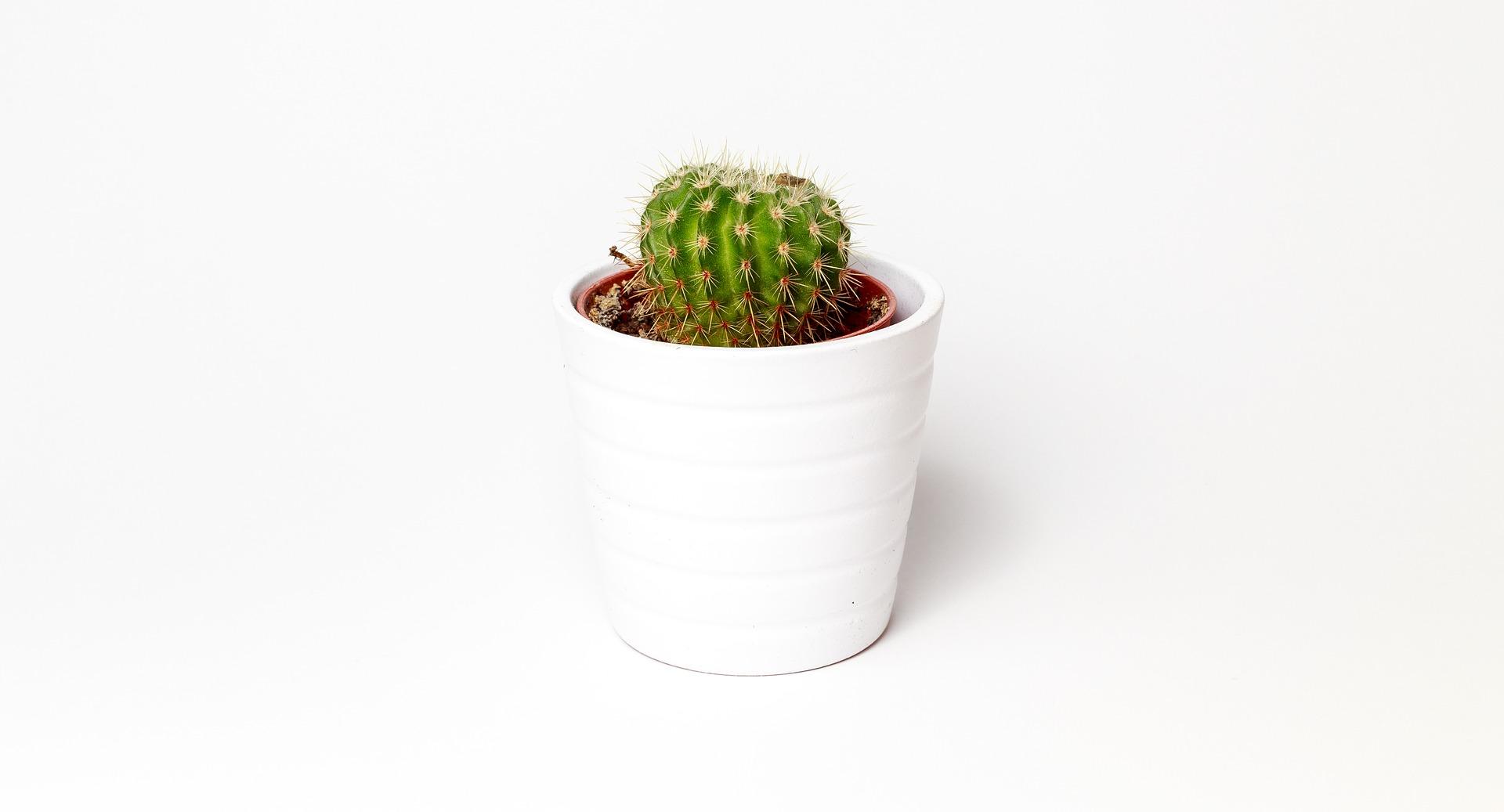 cactus-1842095_1920.jpg
